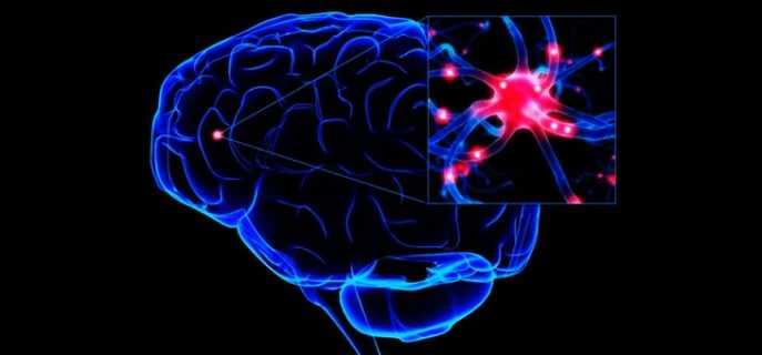 Отделы головного мозга человека и их функции