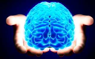 Большие полушария головного мозга человека