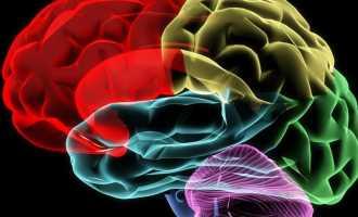 Строение и функции зон головного мозга человека