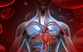 Продукты, улучшающие кровообращение головного мозга
