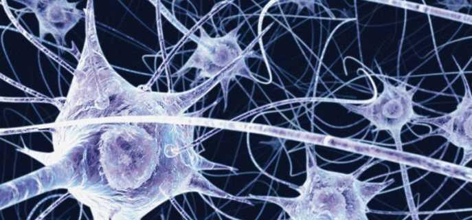 Чувствительный или сенсорный нейрон
