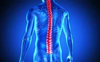 Строение человеческого спинного мозга