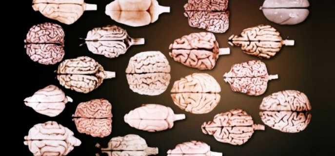 Сколько извилин в мозгу у человека