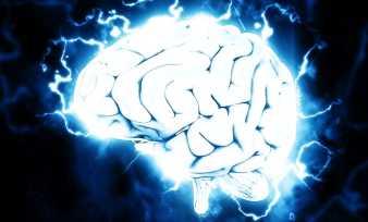 Функции долей головного мозга