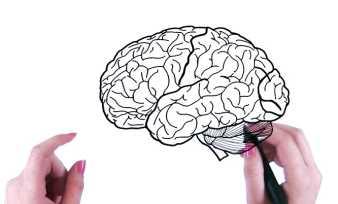 Тест на доминирующее полушарие мозга
