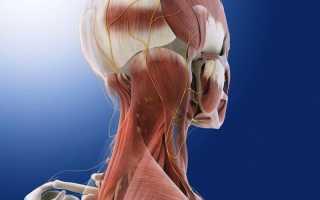 Причины, диагностика и лечение невралгии затылочного нерва