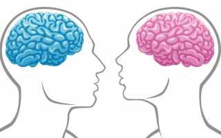 Чем отличается женский мозг от мужского