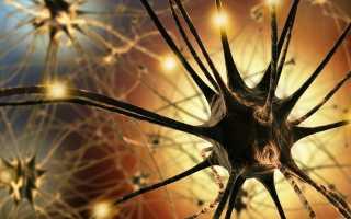 Свойства, типы и строение нейронов