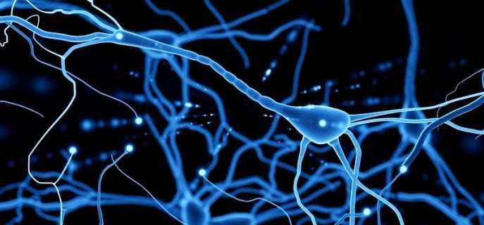 Строение и виды нейронов