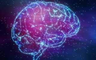 Желудочки головного мозга человека
