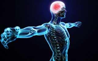 Три типа нервной системы человека
