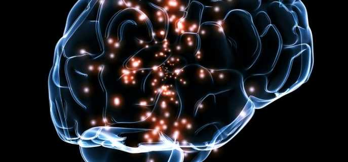 Причины и различия асиметрий головного мозга, их влияние на жизнь человека