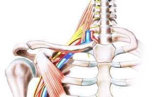 Причины неврита плечевого нерва, симптомы заболевания и его лечение