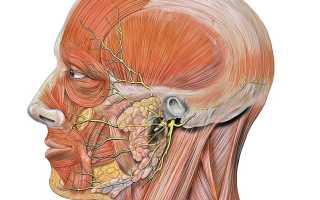 Способы лечения невралгии тройничного нерва в домашних условиях