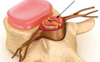 Корешки спинного мозга: строение и функции