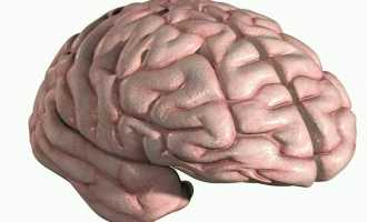 Строение и функции коры головного мозга