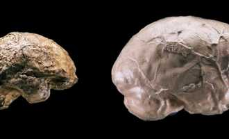 Как влияет объем мозга на способности человека