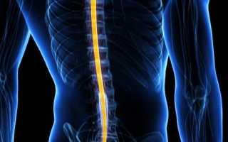 Проводящие пути спинного мозга