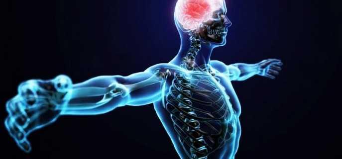 Строение и заболевания центральной нервной системы