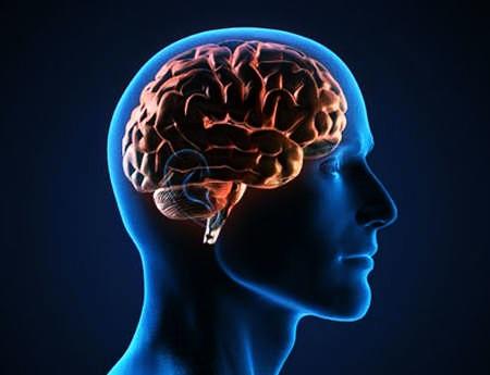 Мозги